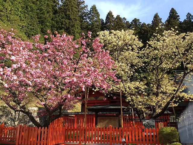 金櫻神社 写真4